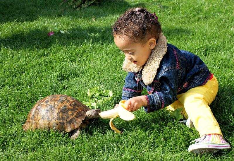 Little girl lovingly feeding her tortoise with a banana royalty free stock images