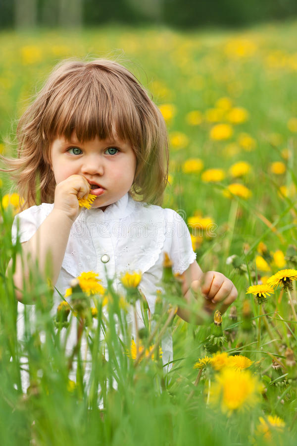 Little girl in a meadow royalty free stock images