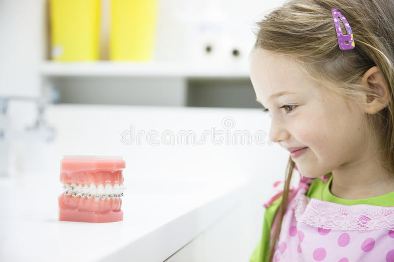Little girl observing model of human jaw with braces. Little girl observing artificial model of human jaw with dental braces in dentists office, smiling stock photo