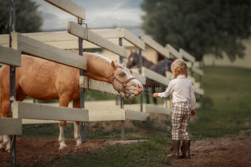 Little girl with palomino pony horse insurer day stock images