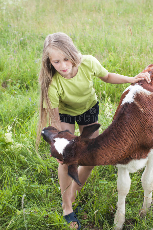 Download Little girl petting a calf stock image. Image of equestrian - 31998037