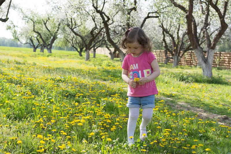 Little girl pick up dandelion on the lawn.  stock images