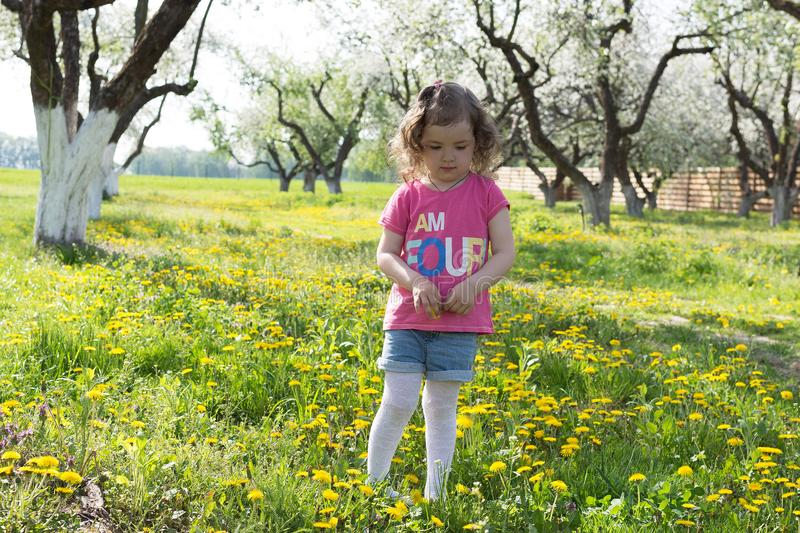 Little girl pick up dandelion on the lawn.  royalty free stock photo