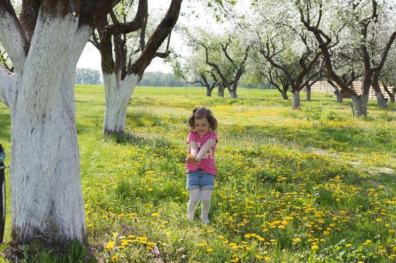 Little girl pick up dandelion on the lawn.  stock photography