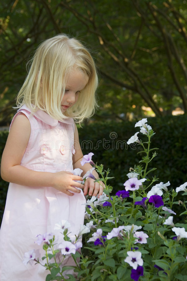 Little girl picking flowers stock images