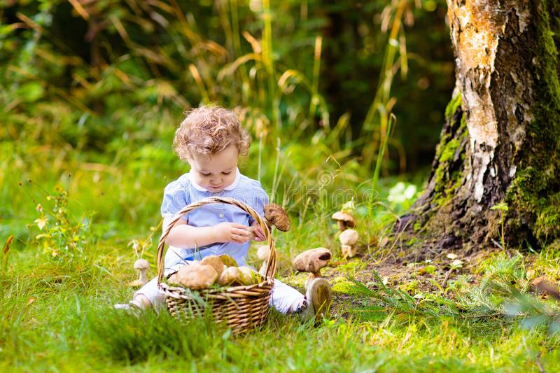 Little girl picking mushrooms in autumn park royalty free stock photography
