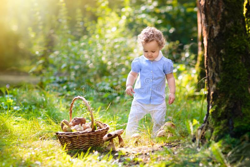 Little girl picking mushrooms in autumn park royalty free stock photos