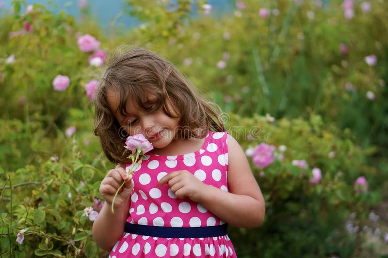 Little girl with pink rose royalty free stock photo