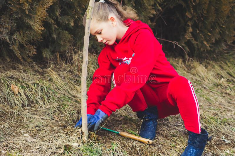 Little girl planting almond tree in a garden, uses a plant maintenance tool. Work in the garden stock images