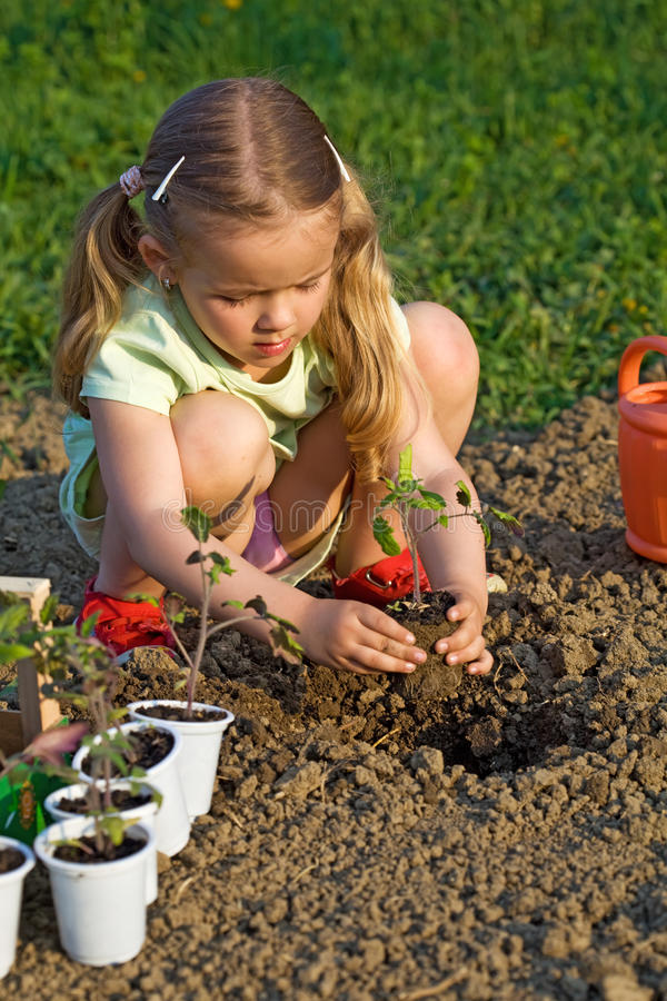 Download Little Girl Planting Seedlings Stock Image - Image: 14857813