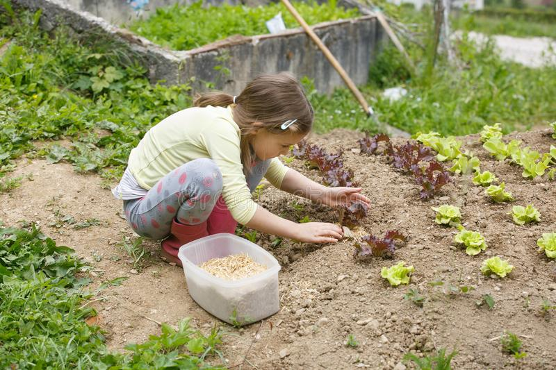 Little girl working in the garden royalty free stock images