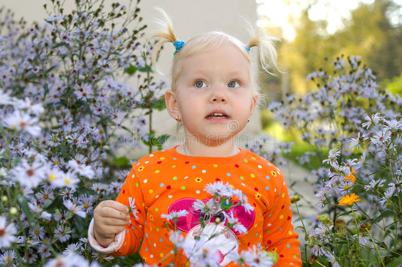 Little girl play in aster flowers in the park. stock photography