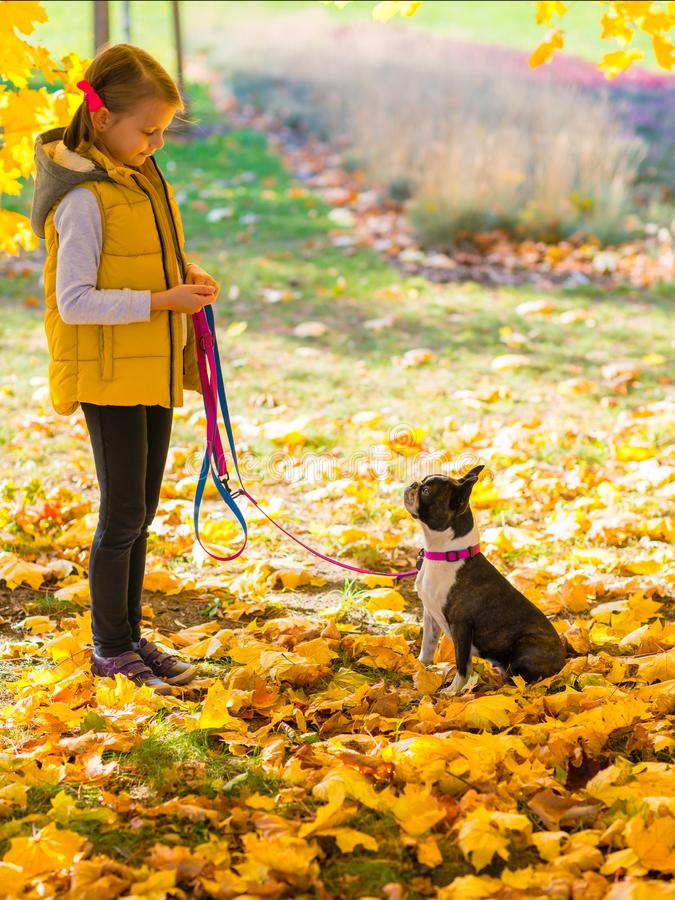 Little girl playing together with boston terrier in the park royalty free stock images