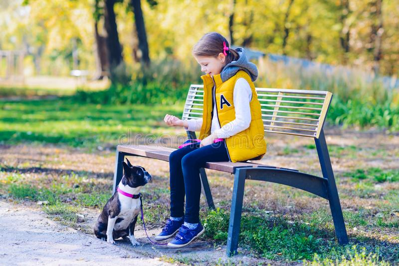 Little girl playing in an autumn park with boston terrier dog. L royalty free stock images