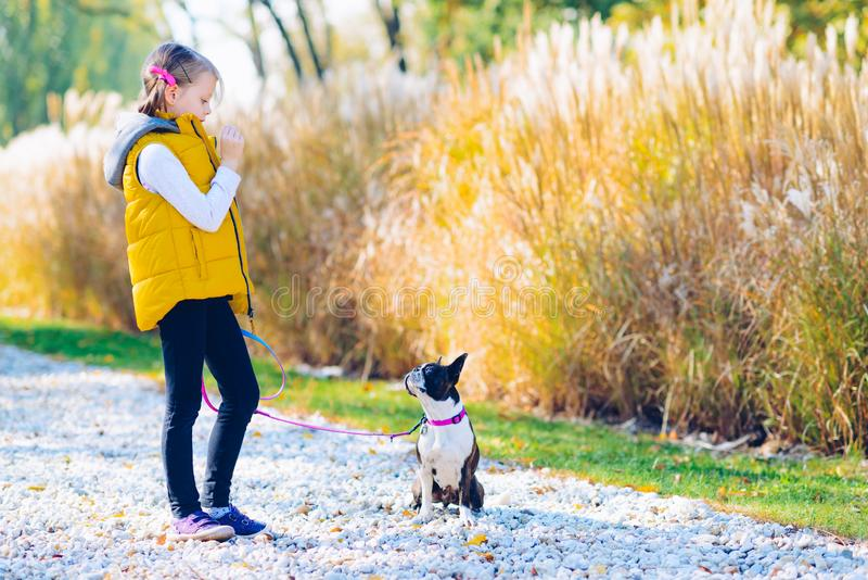 Little girl playing in an autumn park with boston terrier dog. L stock image