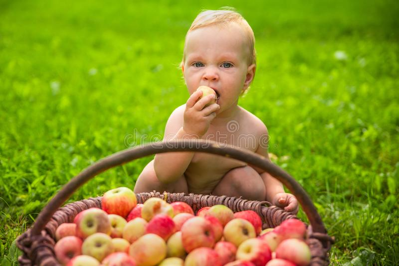 Little girl playing with a basket of apples in the garden. stock photography
