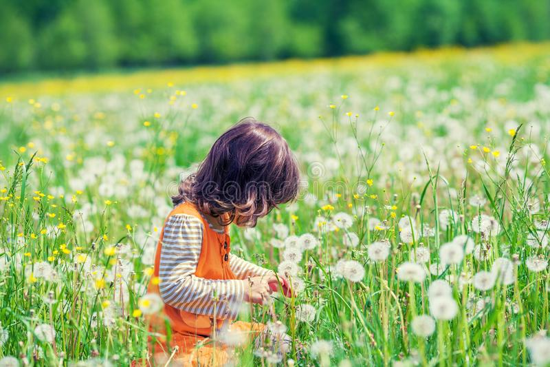 Little girl playing on the dandelion flowers meadow stock images