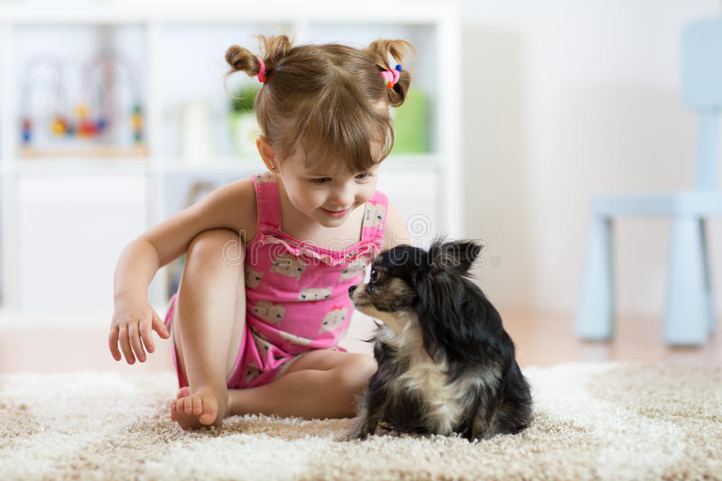 Little girl playing with her small cute dog in the living room royalty free stock image