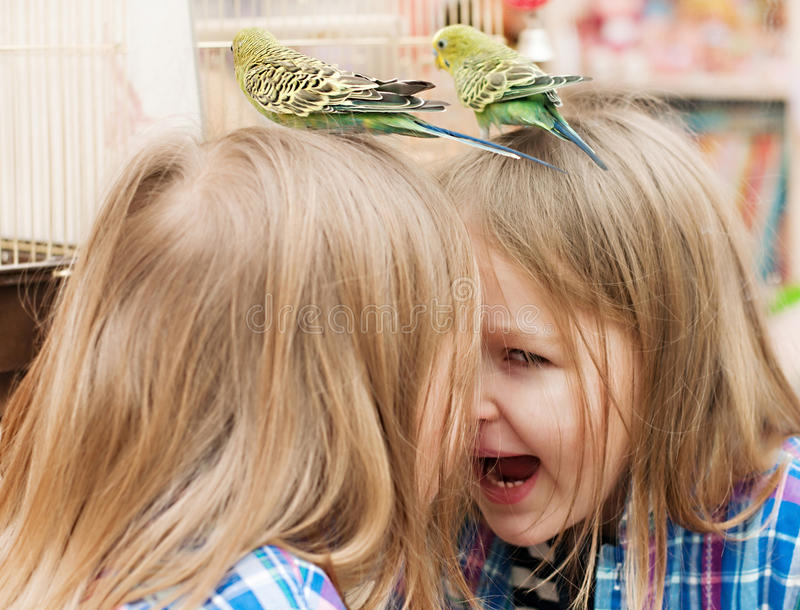 Little girl playing with parrot stock photography