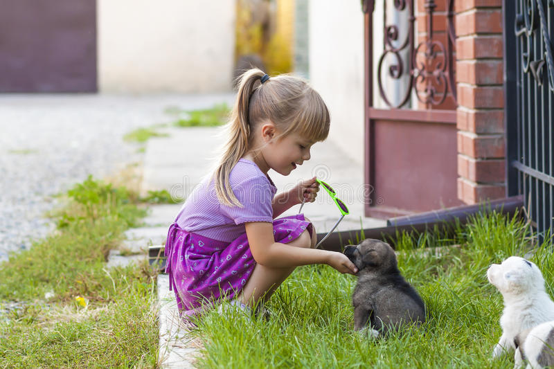 Little girl playing with puppies on green grass royalty free stock photos