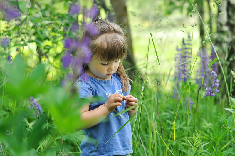 Little girl playing in sunny blooming forest. Toddler child picking lupine flowers. Kids play outdoors. Summer fun for family with stock photo