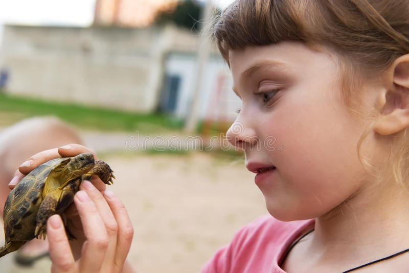 Little girl playing with turtle royalty free stock photography