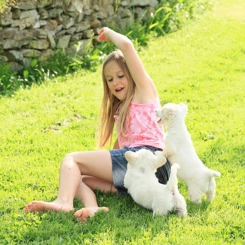 Little girl playing with two puppies stock photos