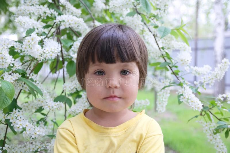 Little girl portrait in spring 4 years old, kindly smiling child toddler. In front of blossoming white flowers royalty free stock image