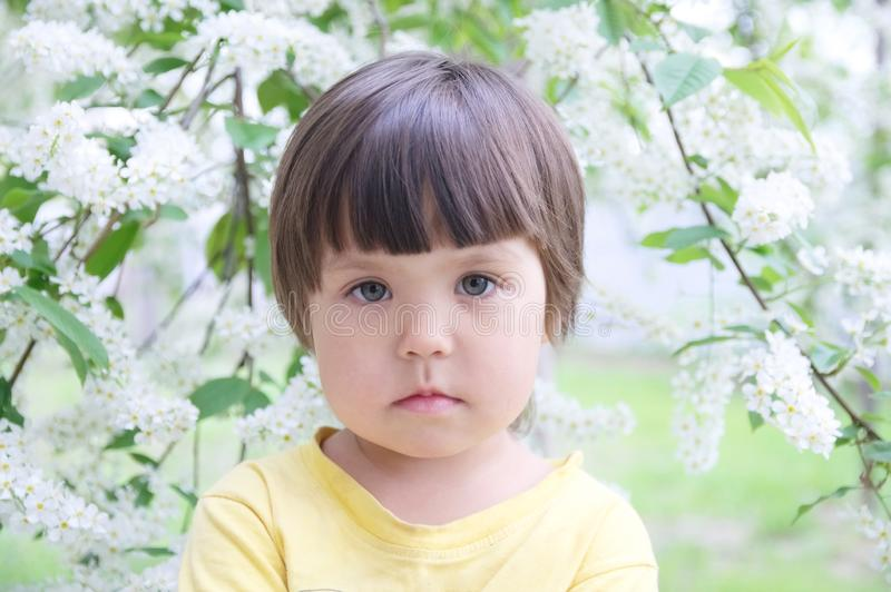 Little girl portrait in spring 4 years old, kindly smiling child toddler. In front of blossoming white flowers stock photos