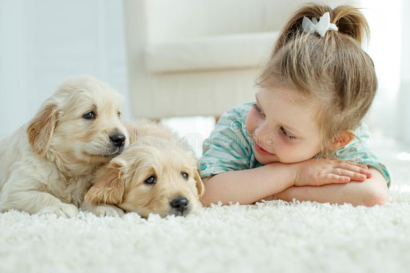 Child with labrador puppies at home on the carpet. Little girl with puppies of a golden retriever at home on the carpet royalty free stock images