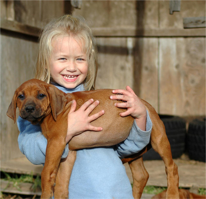 Little girl with puppy. A cute little happy smiling Caucasian girl child carrying her young Rhodesian Ridgeback hound dog puppy in her arms stock photos
