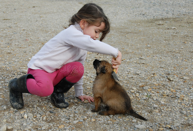 Little girl and puppy. Little girl brushing your puppy belgian shepherd royalty free stock photography