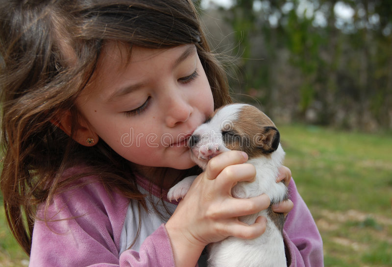 Little girl and puppy. Little girl and her very young puppy purebred jack russel terrier royalty free stock photos