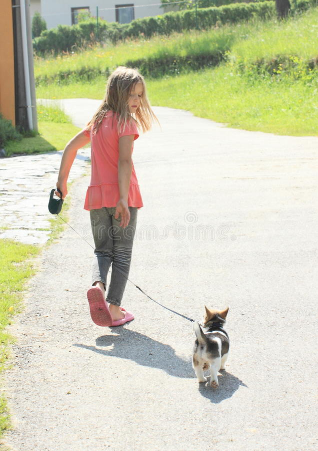 Little girl with a puppy. Little girl in pink t-shirt and grey pants walking with a brown and white puppy royalty free stock photography