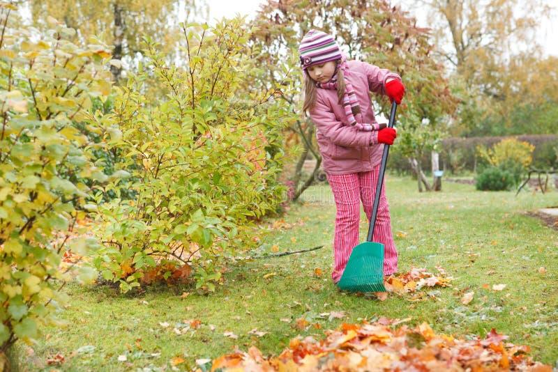 Little girl rake autumn leaves in garden stock photography