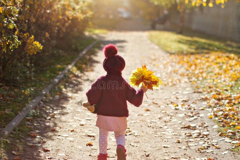 Little girl in red sweater and beret with a bouquet of yellow maple leaves and toy is running on the street in autumn, view from stock photo