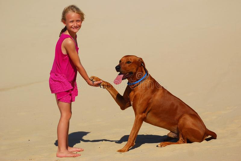 Little girl shaking dog paw. A cute little young blond Caucasian girl child in a pink dress shaking the paw of a purebred Rhodesian Ridgeback hound dog in the