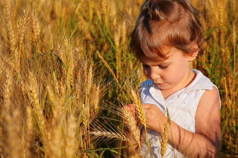 Little girl sits on wheaten field royalty free stock photo