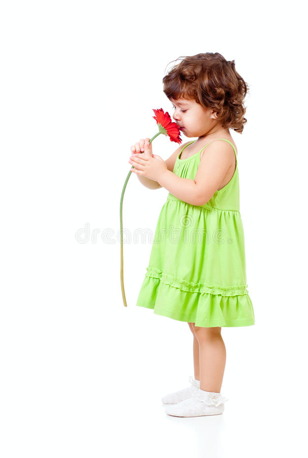 Little girl smells African daisy flower in studio royalty free stock photography