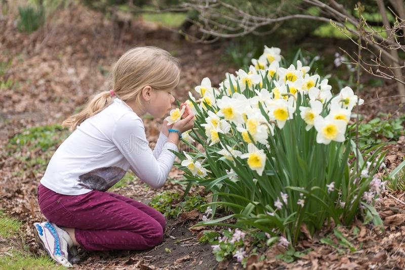 Little girl is sniffing narcissus flower in a park in spring royalty free stock photos