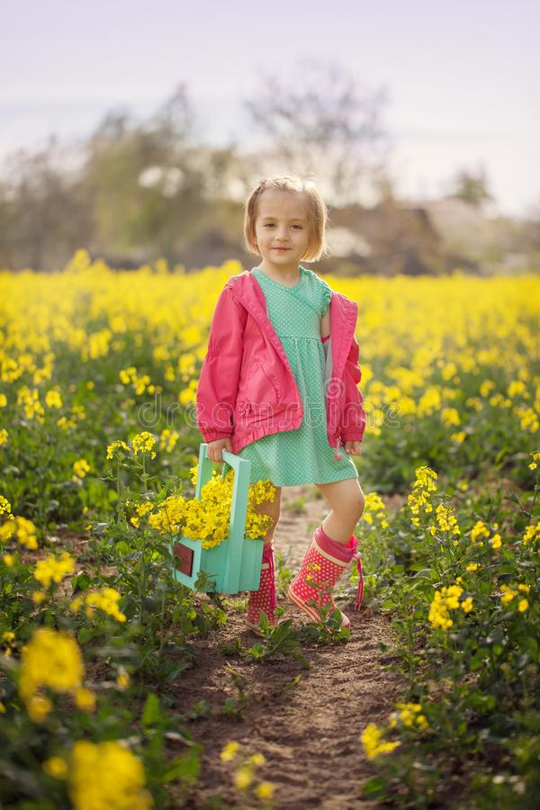 Little girl standing in spring yellow meadow. Child picking summer flowers. Children in country. royalty free stock photos