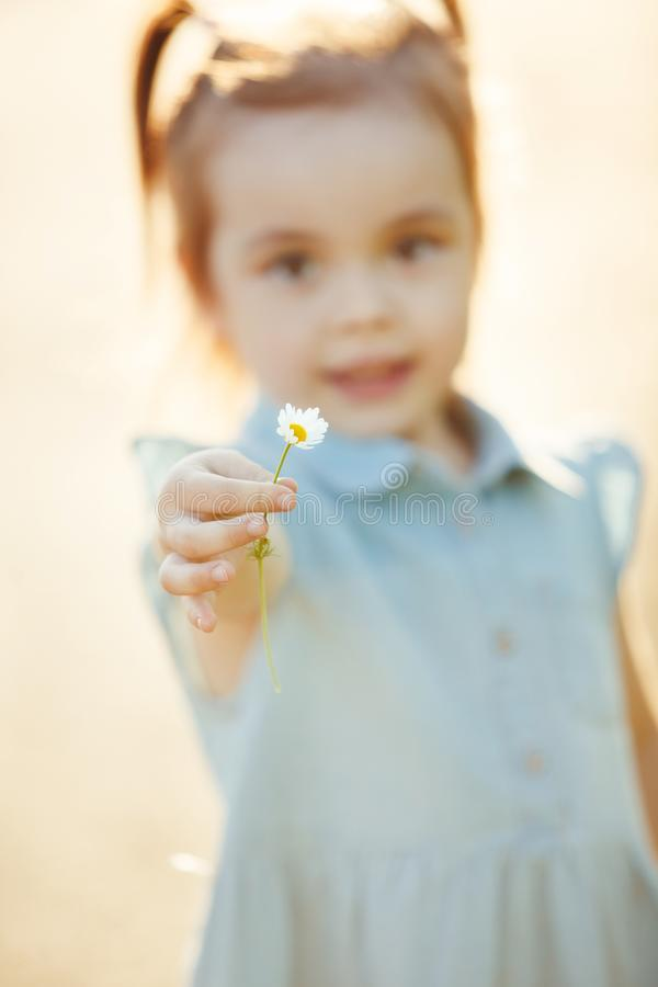 Little girl stretches a Daisy in her hand. the child collects flowers. children`s Allergy to pollen. Little girl stretches a Daisy in her hand. the child stock photo