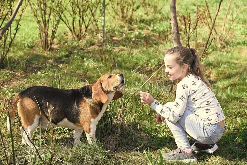Little girl train dog on summer nature. Child play with pet friend on sunny day. Kid with beagle on fresh air outdoor royalty free stock images