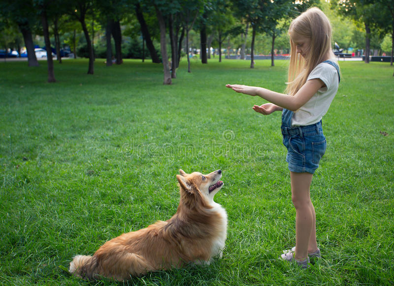 Little girl training a dog stock images