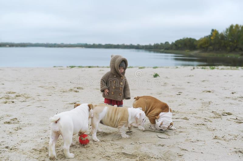 Little girl trains her puppies at the beach in autumn. A kid plays with her small bulldogs.  stock photos