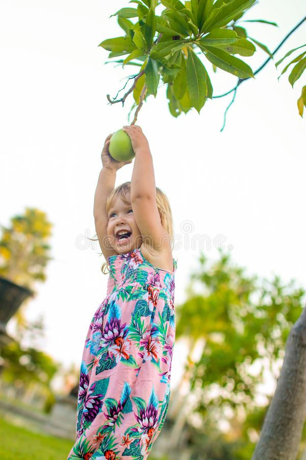 Little girl trying to get a pomello from the tree royalty free stock photo
