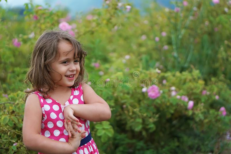 Little girl in valley of roses stock images