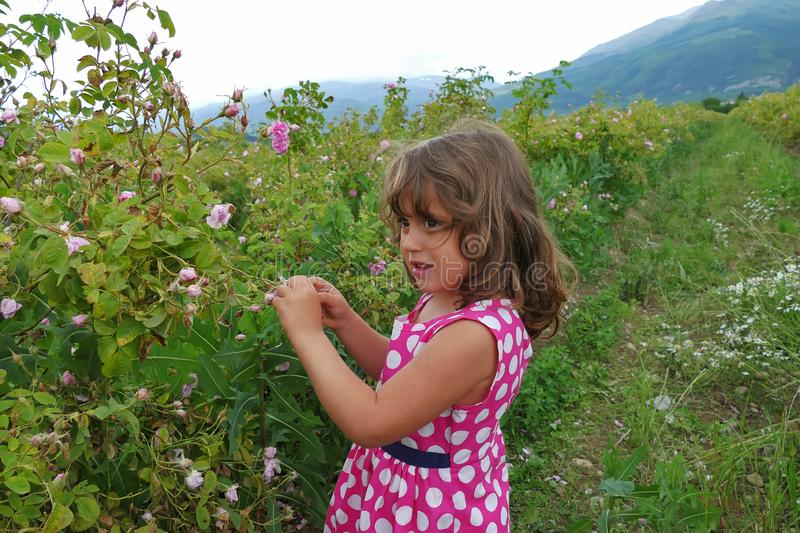 Little girl in valley of roses stock photos