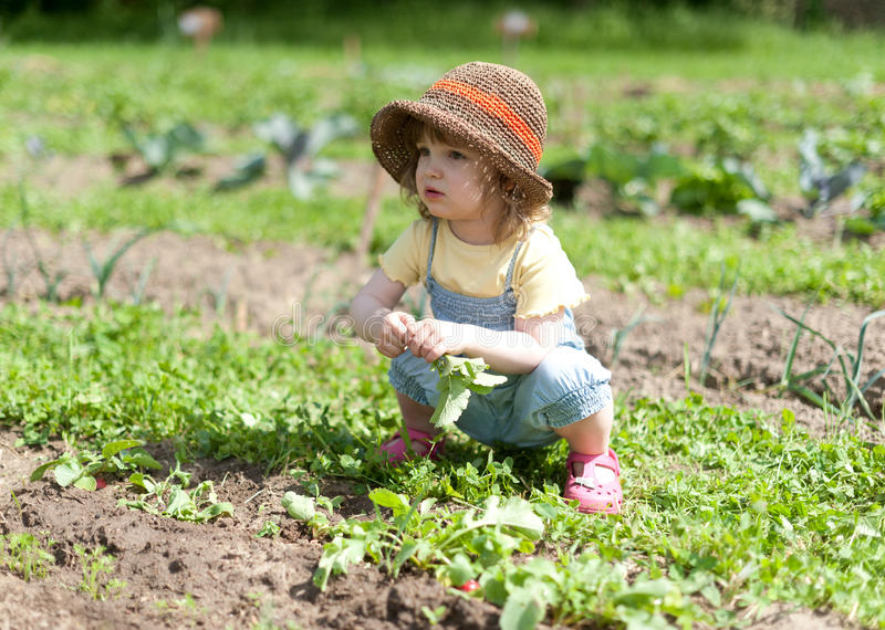 Little girl in vegetable patch stock image