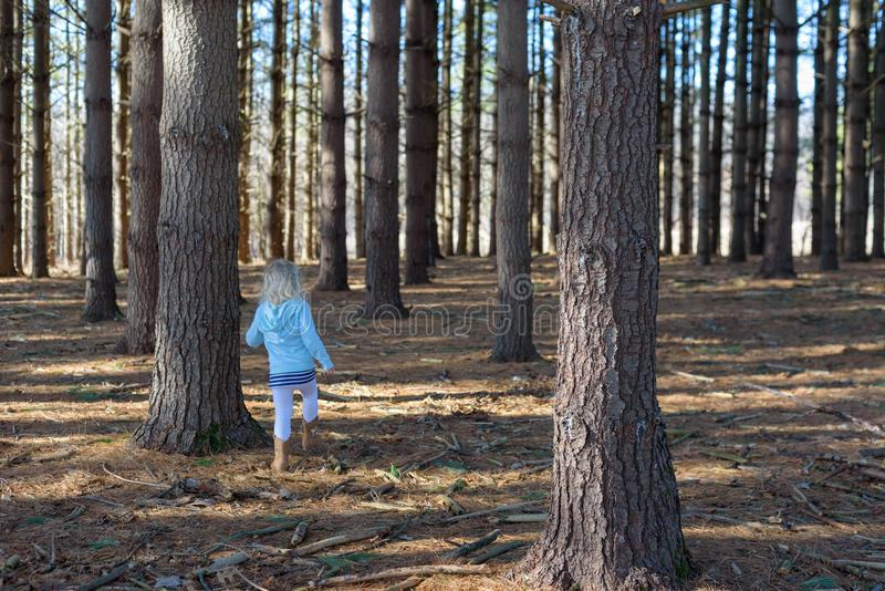 Little girl walking through a grove of pine trees stock photo